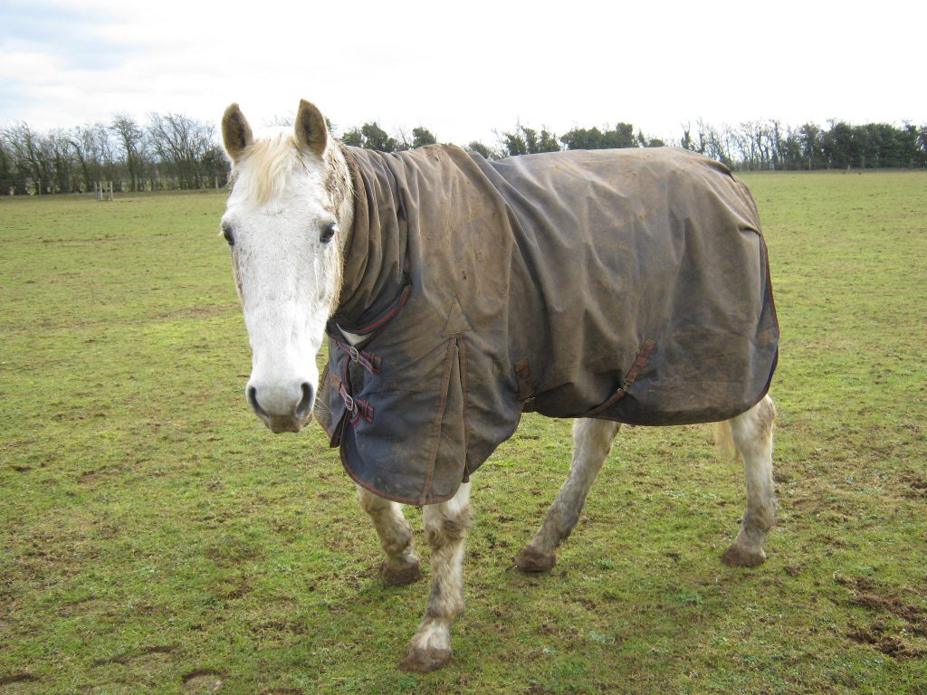 This boy is enjoying the fact that he owns a winter rug!)