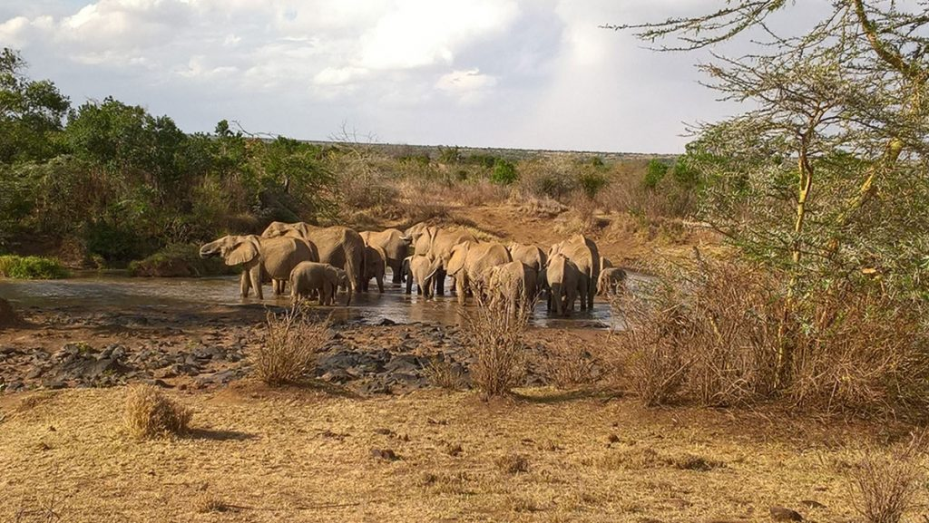 Elephants at Sosian Lodge