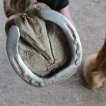 Does your horse need new shoes? Could he go with a half set, or barefoot?