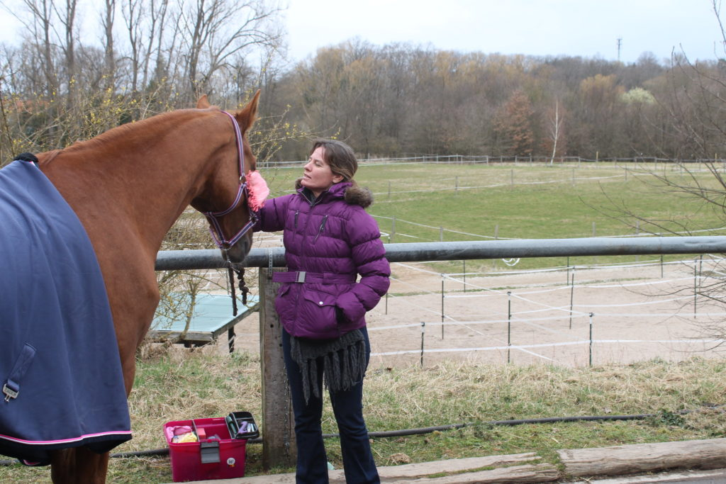 It's nice to just spend time hanging out with your horse….   Even when she's isn't your horse!