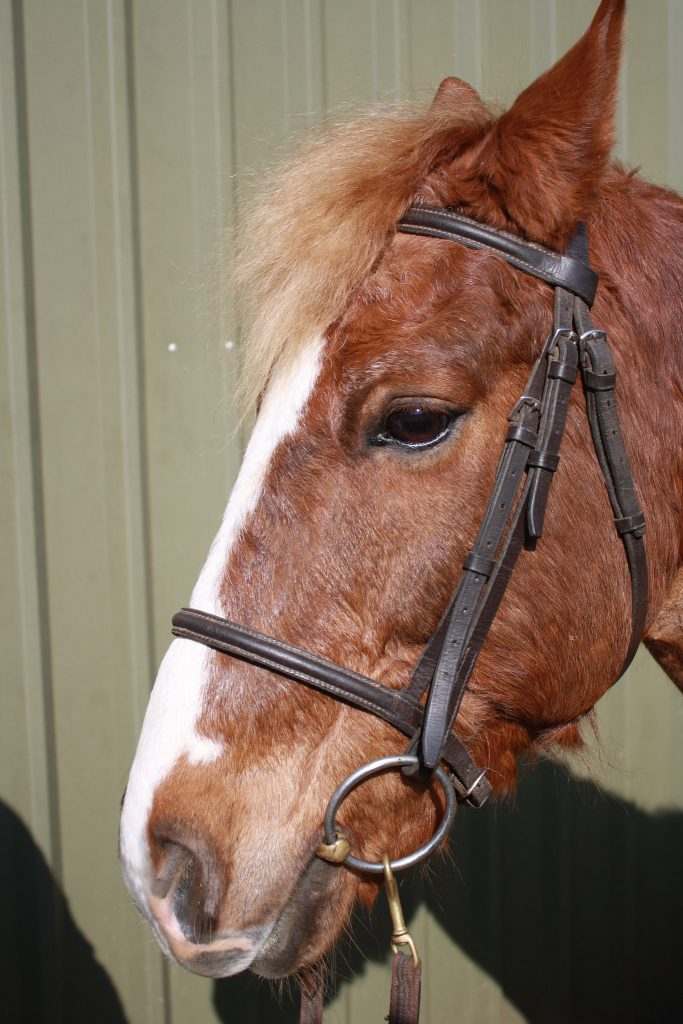 Can you ride your horse in a simple snaffle and loose cavesson noseband