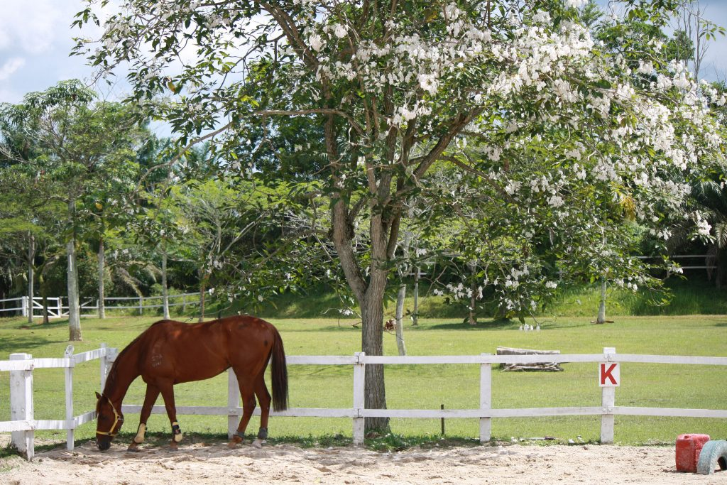 Arenas have letter markers around their fences, and this gives riders a marker point for accurate steering, and navigation points for instructors to give exercises to help improve planning and spatial awareness.