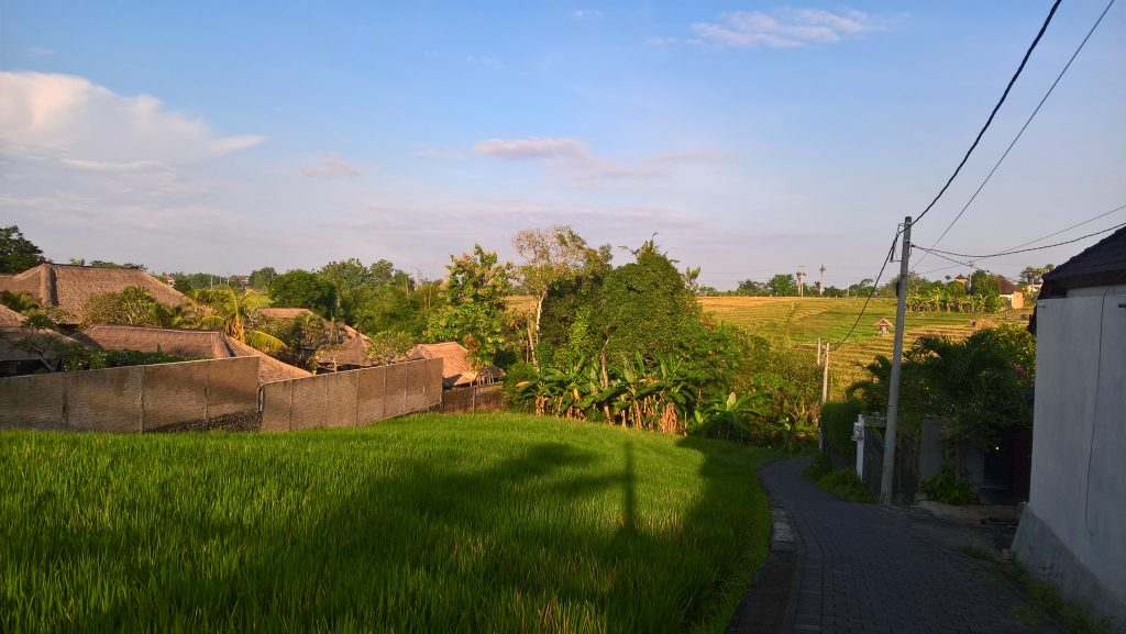 A scooter's road in Bali