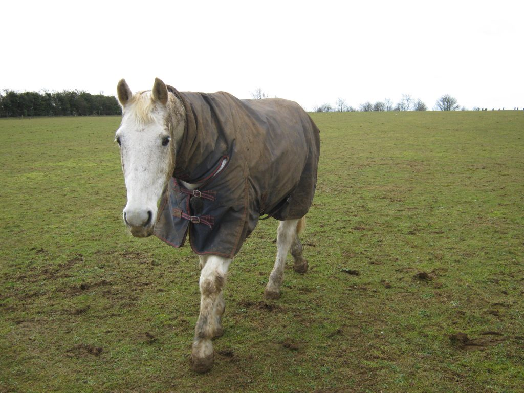 As you walk through a paddock of horses, are they drawn to you or pushed away?