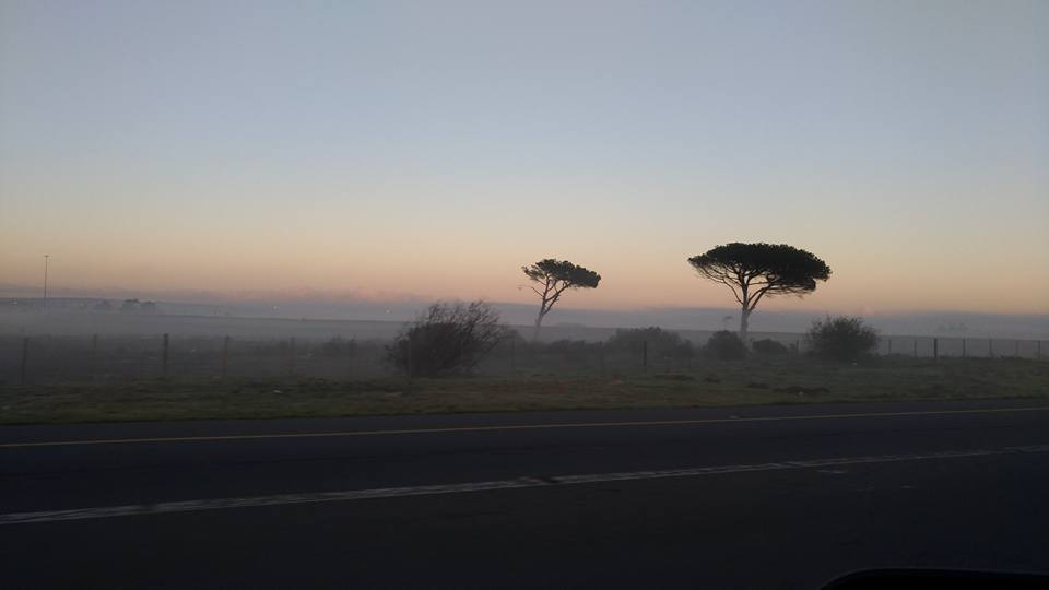 The wind blowing across from the ocean in Cape Town has shaped these trees