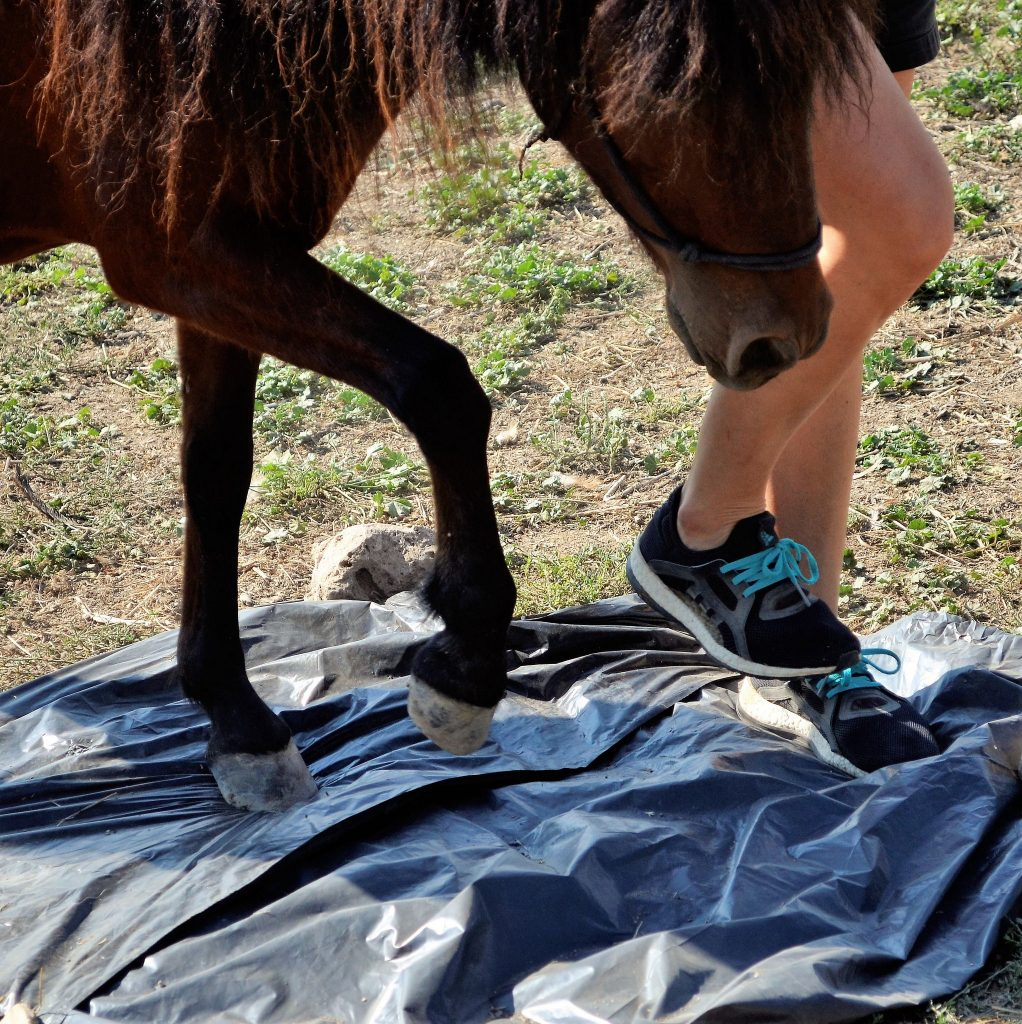 Would your horse cope with walking over a sheet of plastic? Photo credits to Stathis Katsarelias of The Friends of the Skyrian Horse