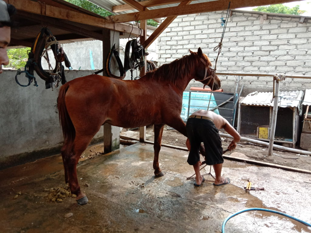 Another garbage pony, this one getting his pedicure and new shoes…