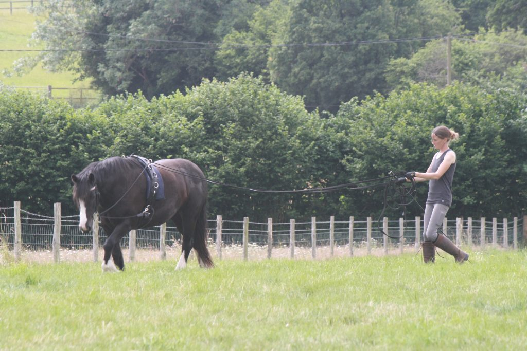 Continental long lining keeps the reins safely away from the horse's hind legs…. I don't ride with my hands by his hocks, why would I want to train with the reins coming from there?